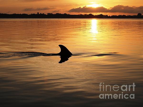 Dolphin Sunrise Print by Fred Benavidez
