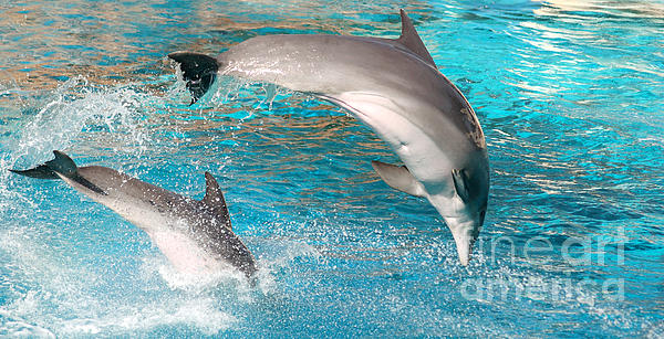 Dolphins Show Print by Michal Bednarek