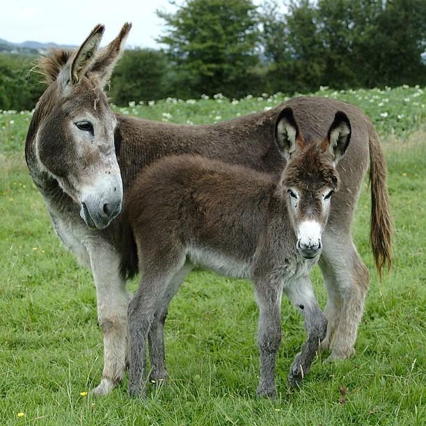 Farm Donkey  donkey  country  farm  love