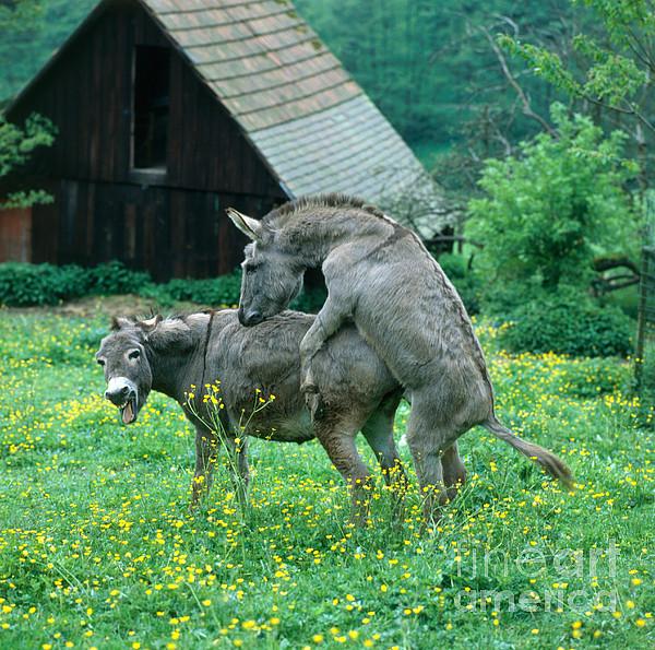 donkey products women and donkey youtube donkeys mating with women ...