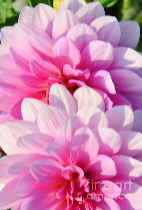 Double Pink Print by Kathleen Struckle
