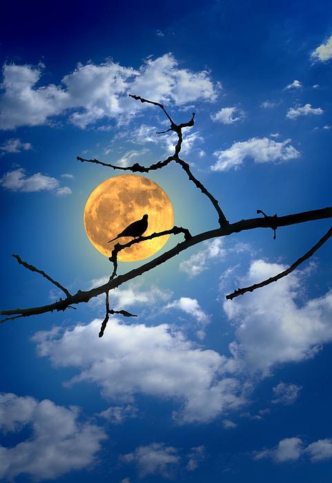 Matjaz Preseren - Dove And Moon