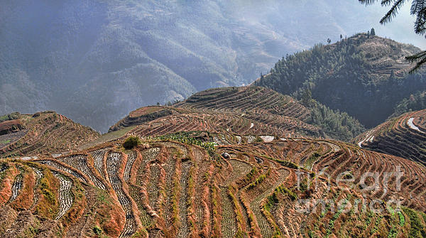 Dragon S Backbone Rice Terraces Print by Alexandra Jordankova