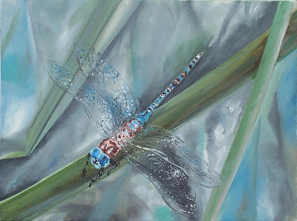 Dragonfly Print by Irene Pomirchy