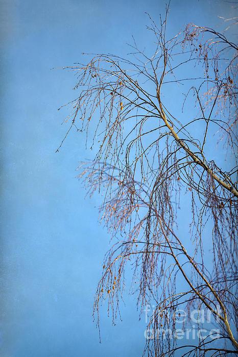 Dream Blue Print by Evelina Kremsdorf
