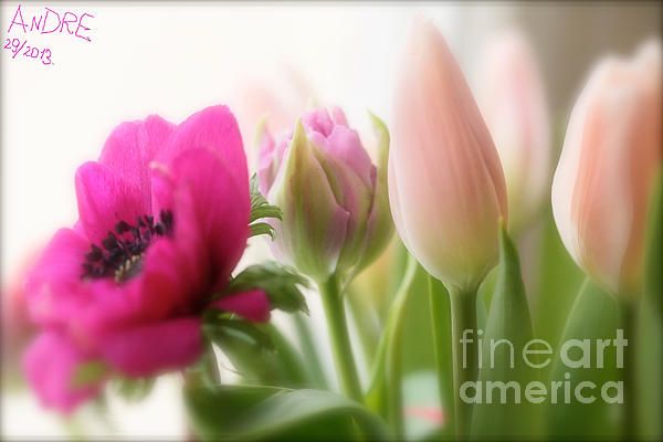 Dreaming Of You....spring Flower ... Feelings Of Love. Print by  Andrzej Goszcz