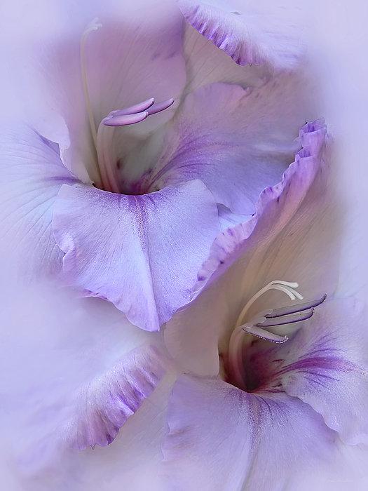Dreams Of Purple Gladiola Flowers Print by Jennie Marie Schell