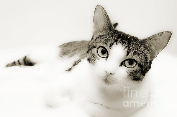 Dreamy Cat 2 Print by Andee Design