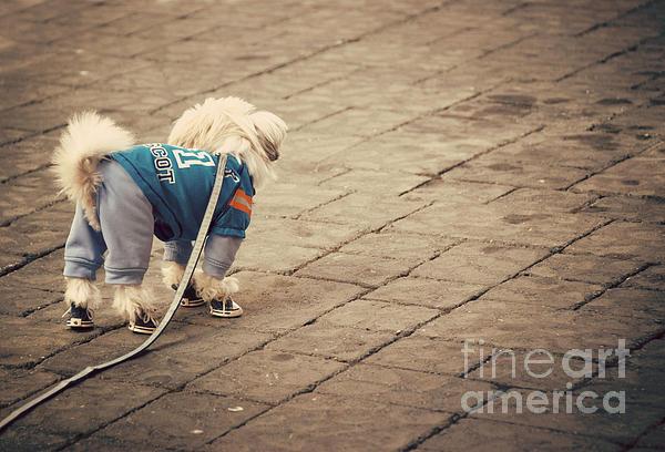 Dressed Up Dog Print by Juli Scalzi