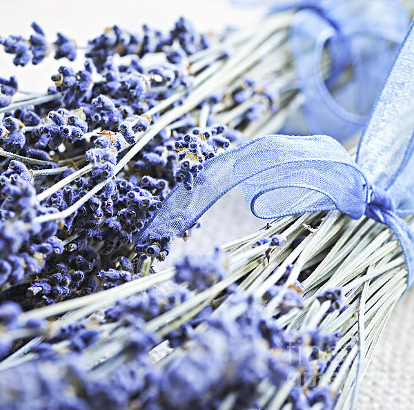 Dried Lavender Print by Elena Elisseeva