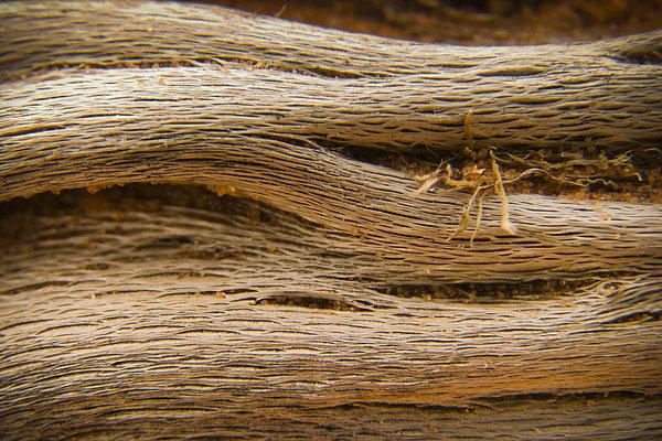 Driftwood 1 Print by Adam Romanowicz