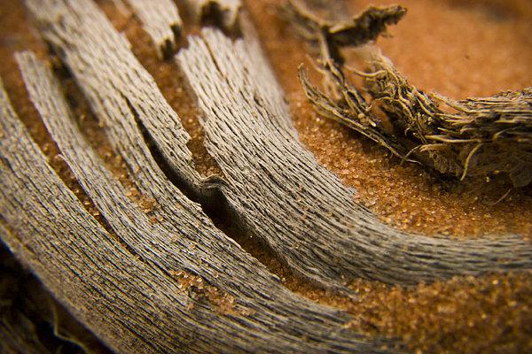 Driftwood 2 Print by Adam Romanowicz