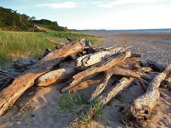Susan Wyman - Driftwood at Sunset