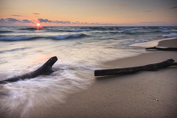 Driftwood On The Beach Print by Adam Romanowicz