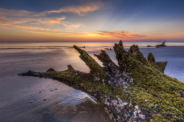 Driftwood On The Beach Print by Debra and Dave Vanderlaan