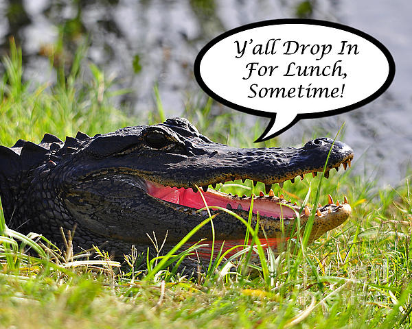 Drop In For Lunch Greeting Card Print by Al Powell Photography USA