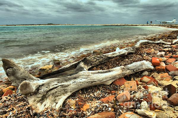 Dry Tortugas Driftwood Print by Adam Jewell