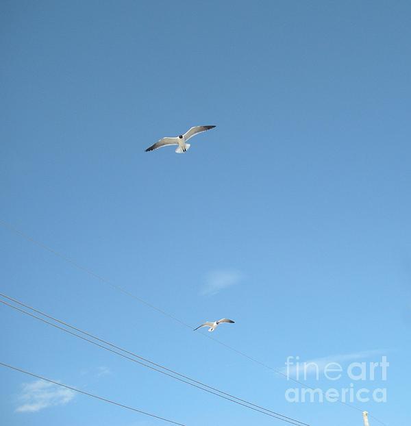 Joseph Baril - Dual Seagulls