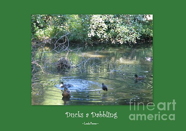 Linda Prewer - Ducks a Dabbling