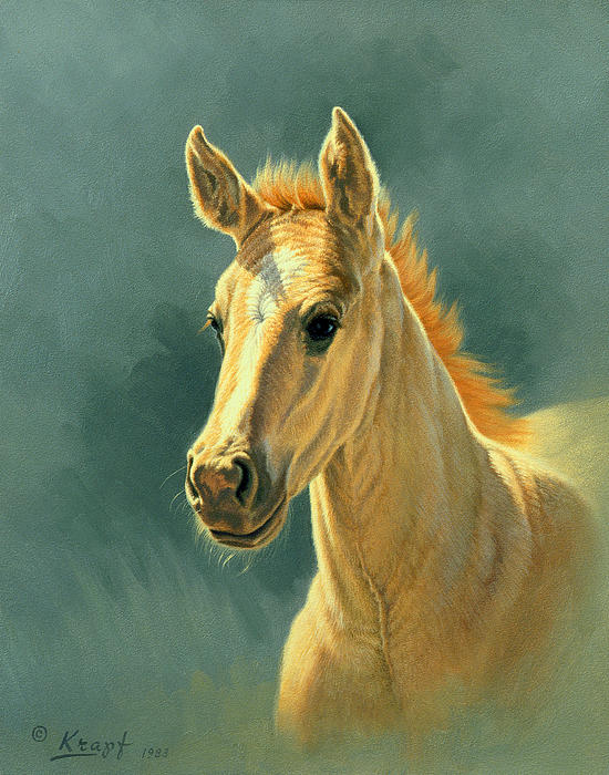 Dun Colt Portrait Print by Paul Krapf