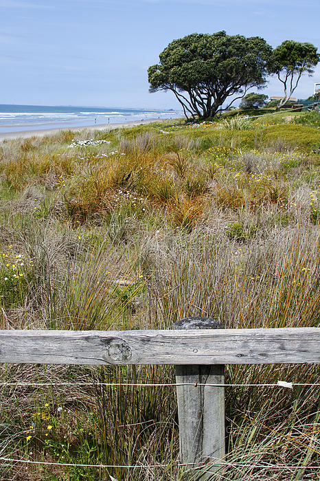 Dune Grass Print by Les Cunliffe