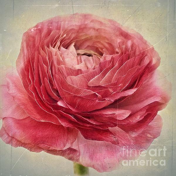 Dusty Pink Print by Priska Wettstein