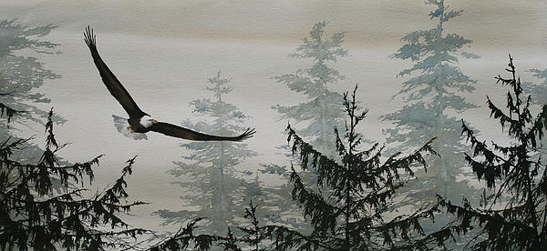 Eagle And Cedars Print by James Williamson