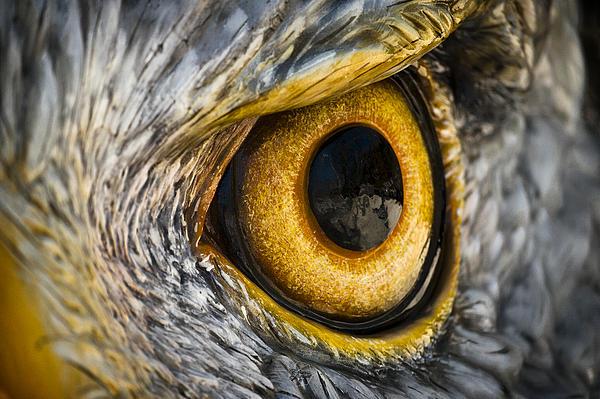 Eagle Eye Print by Brian Archer