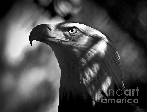 Eagle In Shadows Print by Robert Frederick
