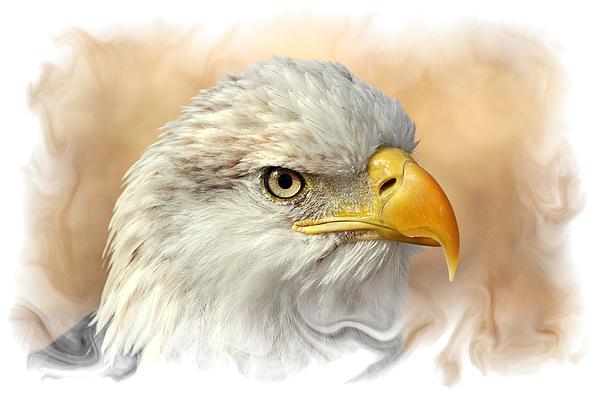 Eagle6 Print by Marty Koch