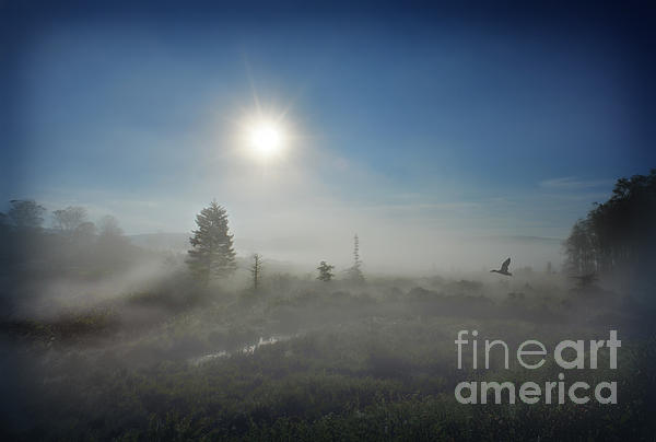 Early Morning Fog At Canaan Valley Print by Dan Friend