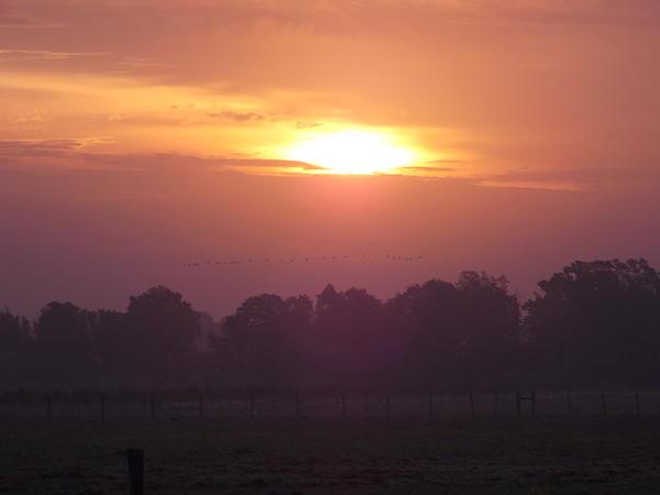Early Morning Risers Print by John  Glass