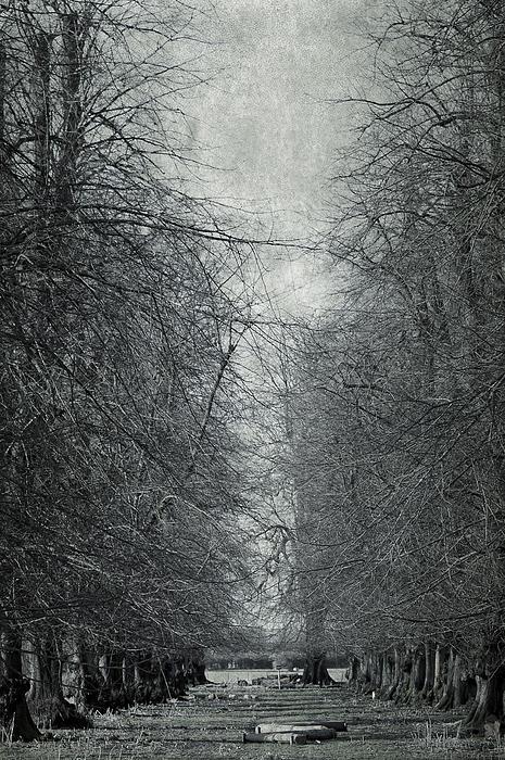 Early Spring Print by Svetlana Sewell