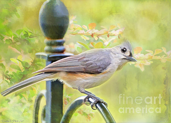 Debbie Portwood - Early Summer Tufted Titmouse - Digital Paint I