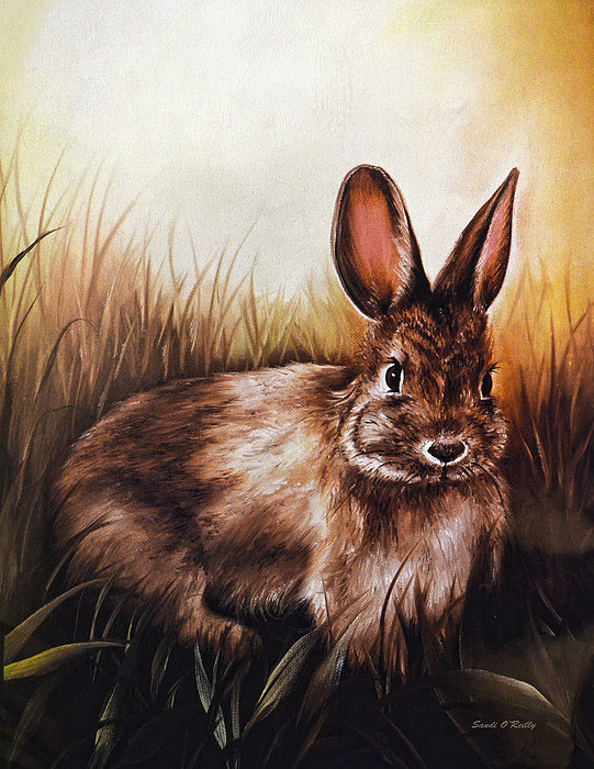 Sandi OReilly - Eastern Cottontail Rabbit