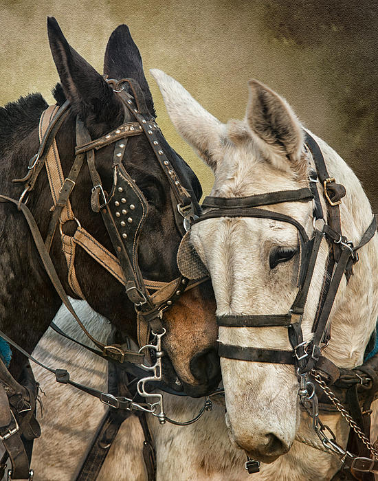 Ebony And Ivory Print by Ron  McGinnis