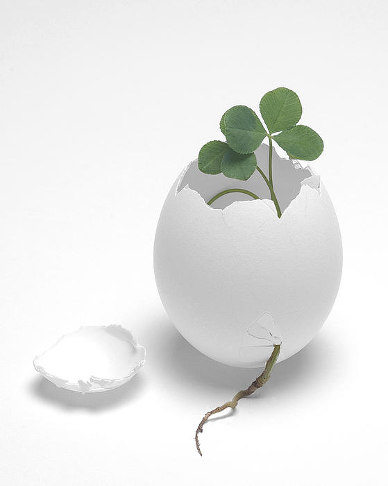 Egg And Clover Print by Krasimir Tolev