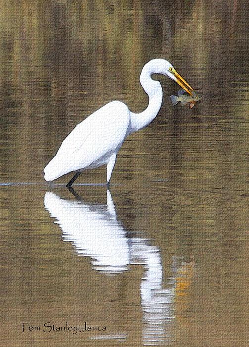 Egret Eats Fish Print by Tom Janca