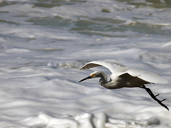 Joe Schofield - Egrets Only