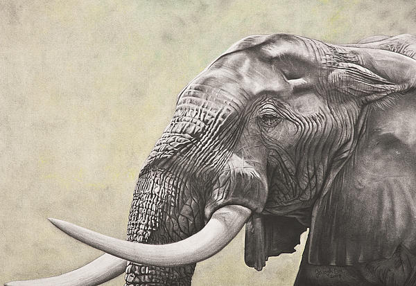 Elephant Print by Ashleigh Dix