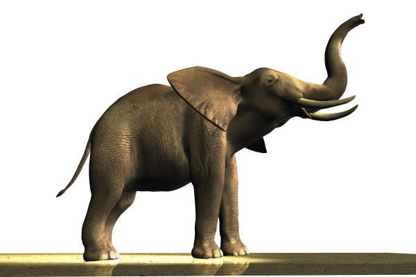 Elephant Print by Corey Ford