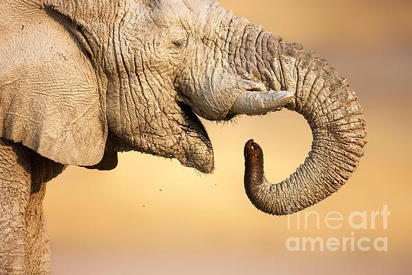 Elephant Drinking Print by Johan Swanepoel
