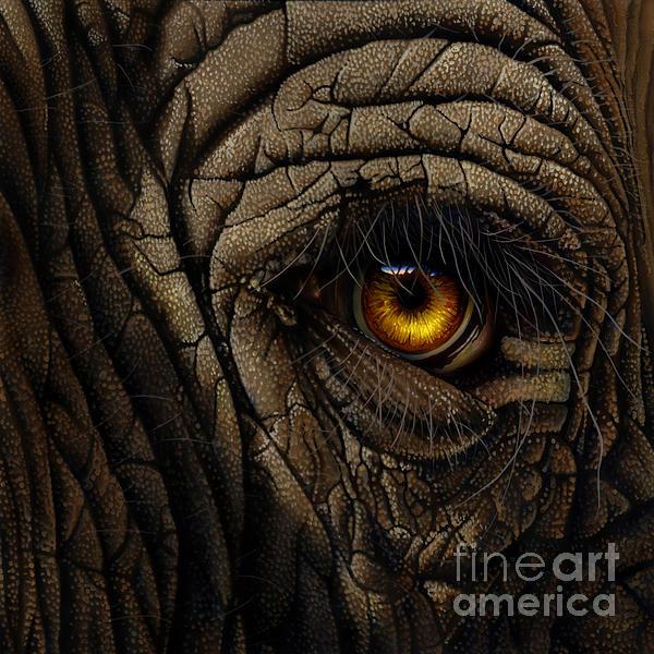 Elephant Eye Print by Jurek Zamoyski