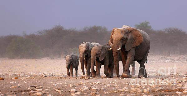 Johan Swanepoel - Elephant herd