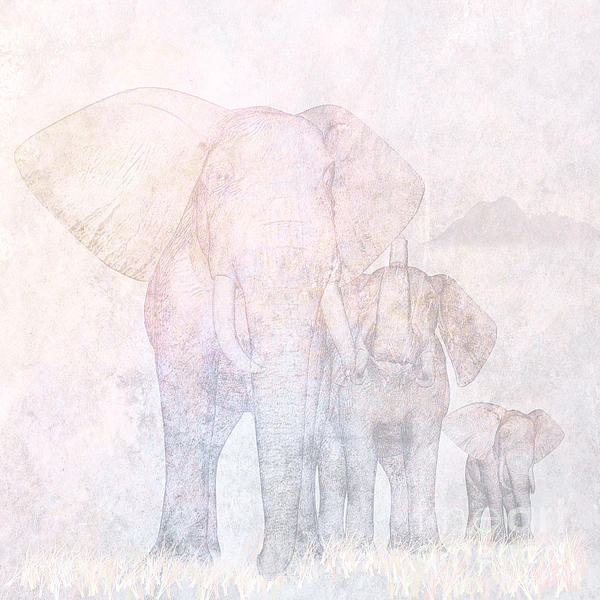 Elephants - Sketch Print by John Edwards