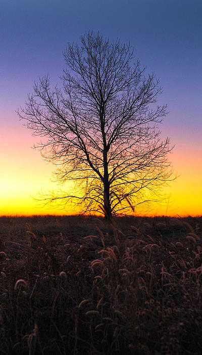 Ellis Island Lone Tree Print by David Yunker