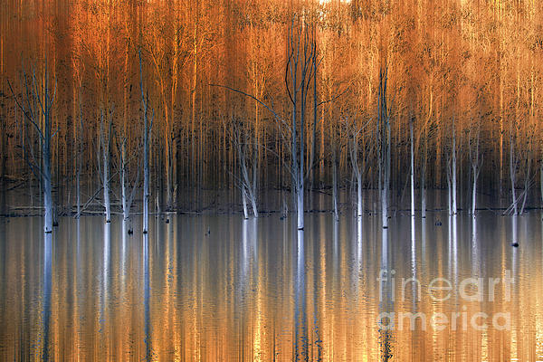 Emerging Beauties Reflected Print by Marco Crupi