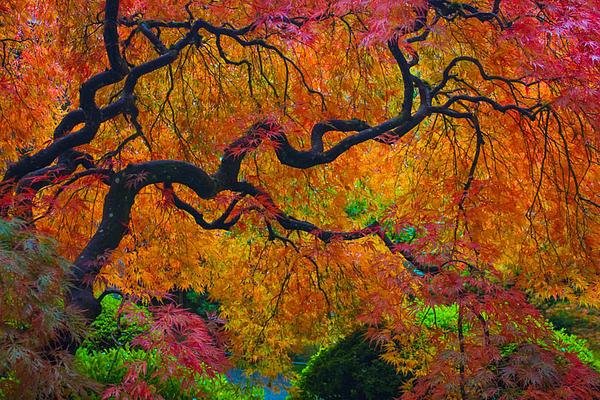 Enchanted Canopy Print by Patricia Babbitt