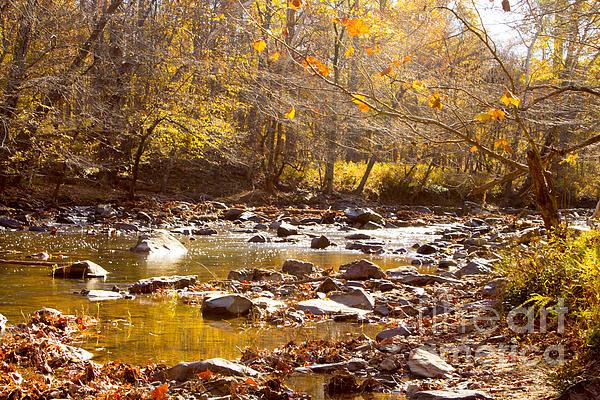 Sandra Clark - Eno River in  the Fall 4