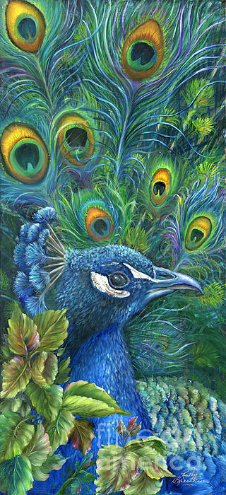 Enticing Peacock Print by Kathy Brecheisen